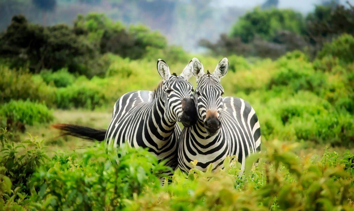 top 7 vakantielanden in afrika