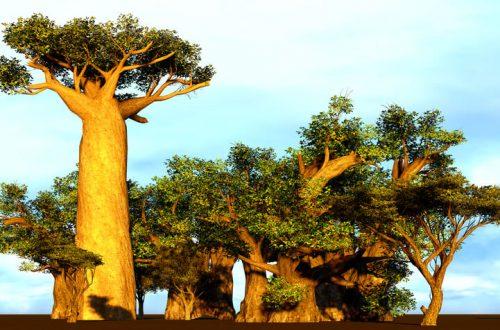 wat zijn de voordelen van baobab olie