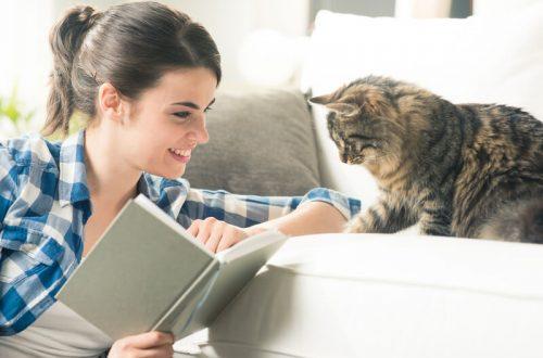 hoe verzorg ik het beste een kat