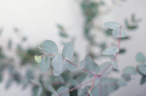 Eucalyptus-in-huis