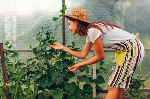groente en fruit kweken