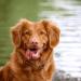 Hondenbrokken als superfood (1)