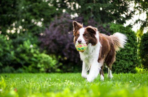gezondheidsproblemen hond