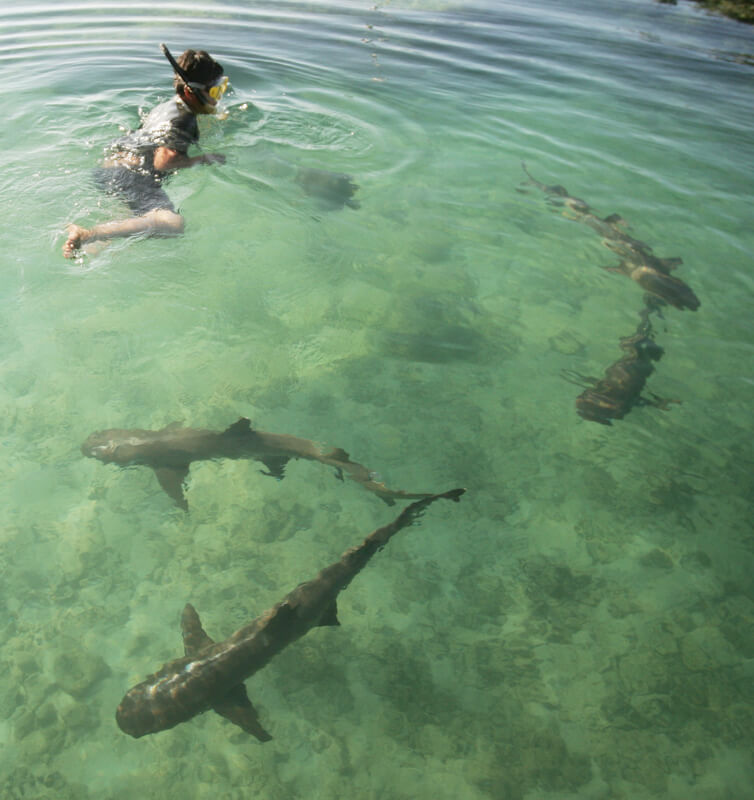 De mooiste plekken om met haaien te zwemmen