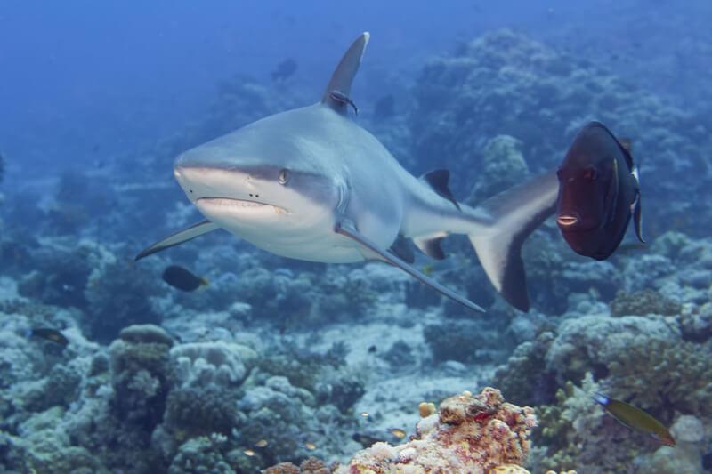 met haaien te zwemmen
