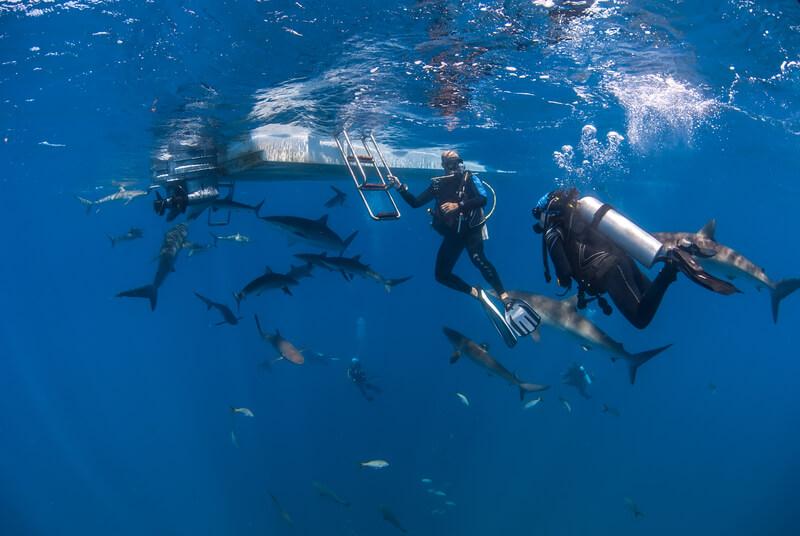 mooiste plekken om met haaien te zwemmen