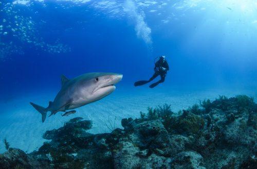 plekken om met haaien te zwemmen